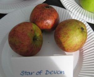 Star of Devon